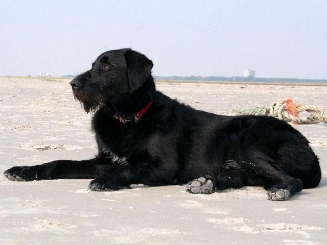 St. Peter-Ording Hotel Eulenhof: Hund Filu am Strand