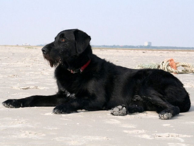 St. Peter-Ording Hotel Eulenhof: Dog Filu on the beach